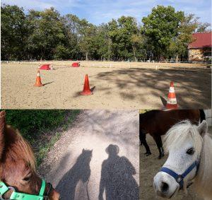 pferdegestützte Gruppensupervision
