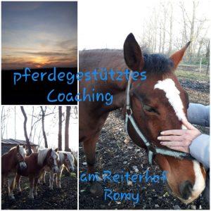 pferdegsetzütztes Coaching