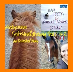 pferdegest_SE1_2